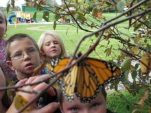 students observing butterfly